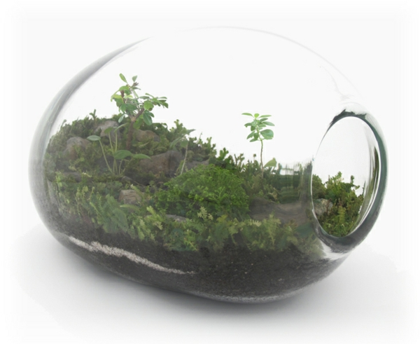 designer idee originelles terrarium f r ihre bonsai b ume. Black Bedroom Furniture Sets. Home Design Ideas