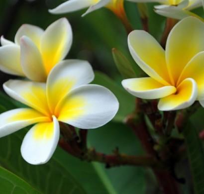 Gartengestaltung Tipps - pflanzen Sie Ihre Lieblingsblumen ein