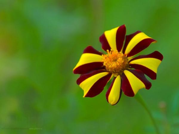 gartengestaltung tipps lieblingsblumen vermehren gartenarbeit