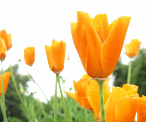 gartengestaltung tipps lieblingsblumen vermehren gelb akzente