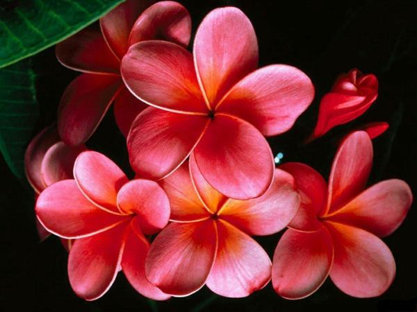 gartengestaltung tipps lieblingsblumen vermehren pfropfung
