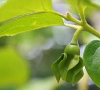 Gartengestaltung Tricks und Tipps für einen attraktiven und gesunden Garten