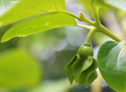 gartengestaltung tricks und tipps pflanzen blühte