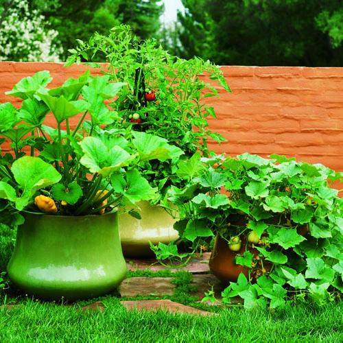 gartengestaltung tricks und tipps pflanzen blumentäpfe