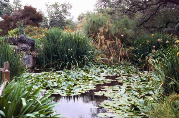 cool Gartenteich anlegen wassergarten gestalten