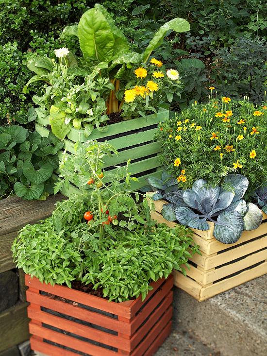 gemüse anbau in containern blau keramisch holz kiste