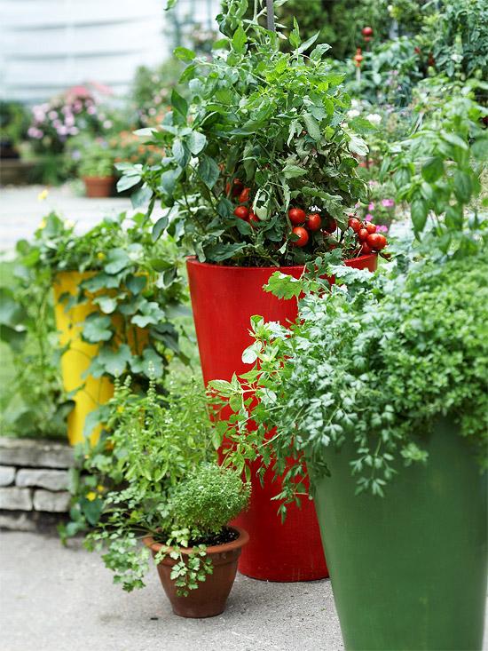 gemüse anbau in containern blau keramisch tomaten