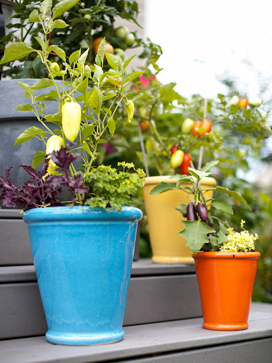 gemüse anbau in containern blau keramisch topf