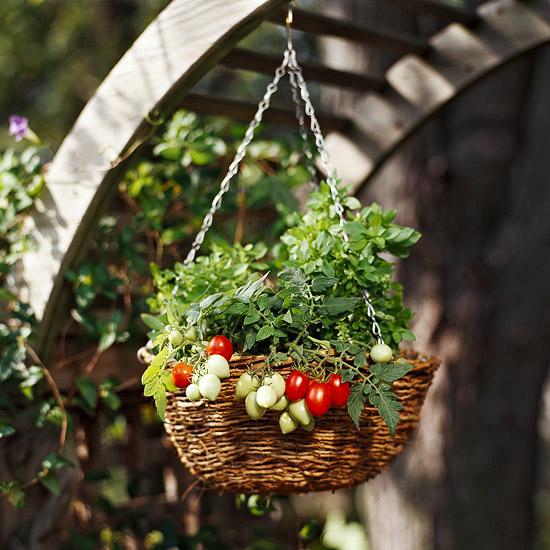 gemüse anbau in containern hängekorb