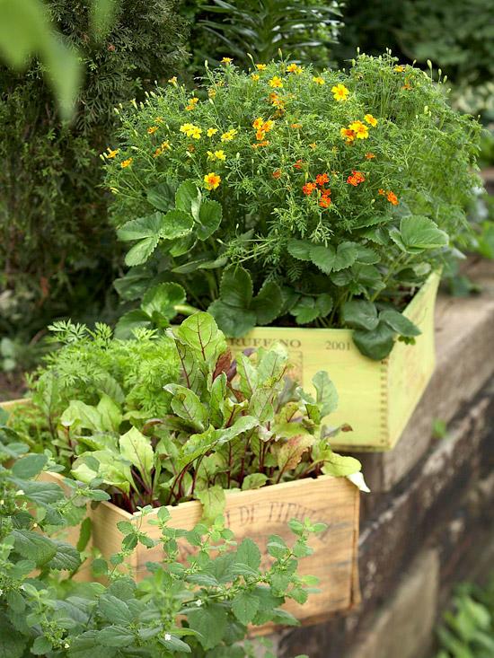 gemüse anbau in containern weinkisten