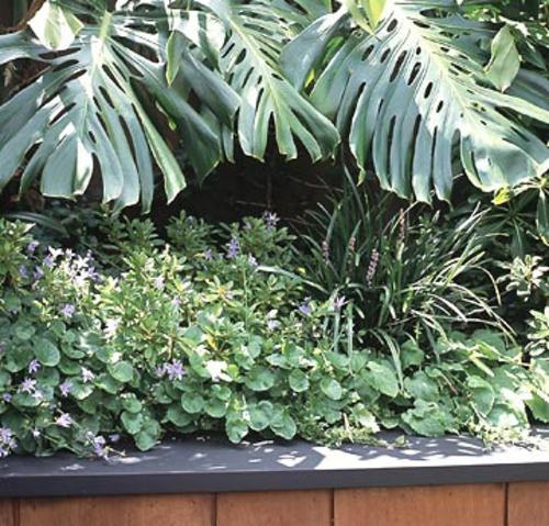 große landschaft klein garten blätter grün tropisch