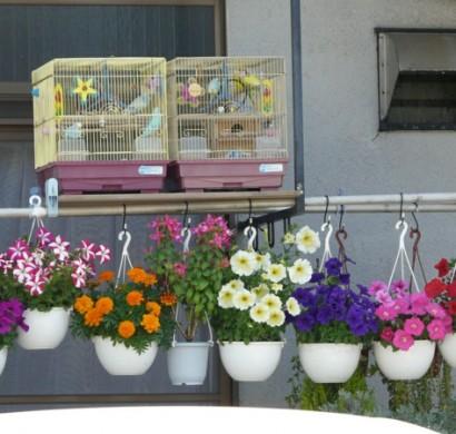 Hängenden Garten Auf Balkon Gestalten Coole Balkon Pflanzen