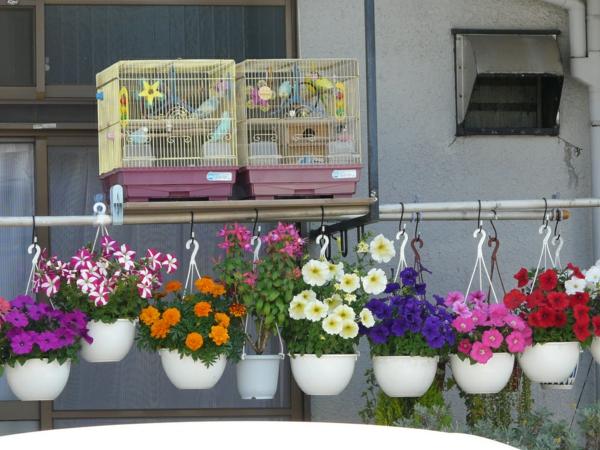 hängenden garten auf balkon gestalten kleingarten käfig