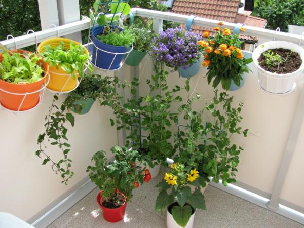 hängenden garten auf balkon gestalten kleingarten topf