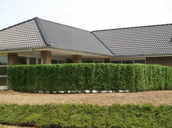 hecke pflanzen stilvoller lebendiger zaun. Black Bedroom Furniture Sets. Home Design Ideas