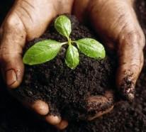 Perfekter Erdboden – ein Traum für die Gärtner