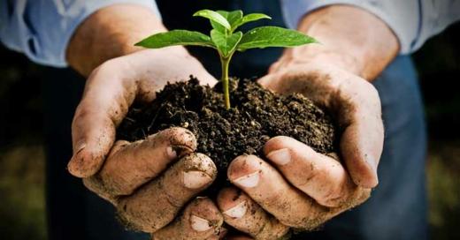 perfekter erdboden arbeit hände fruchte pflanzen