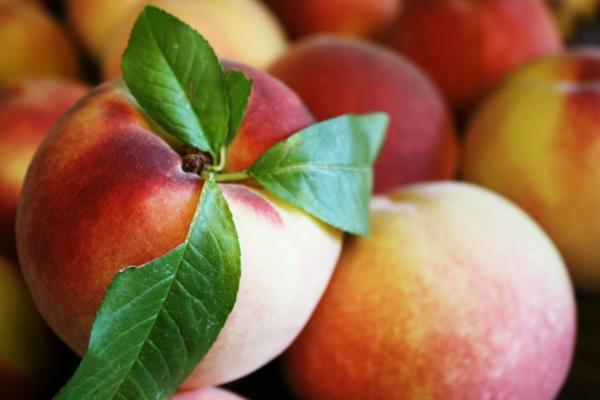 pfirsichbaum im garten pflanzen andere sorte