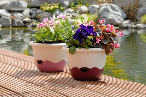 pflanzen für balkon hängen rosa blüten frisch