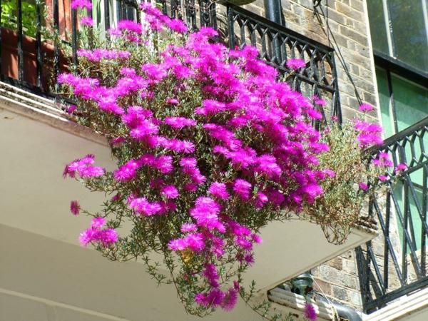 Pflanzen für den Balkon hängen rosa blüten
