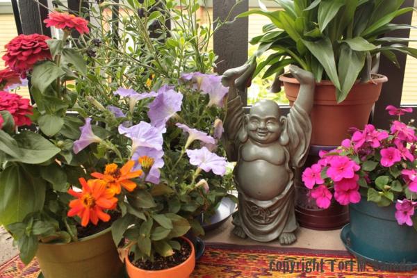 pflanzen für balkon hängen rosa buddha