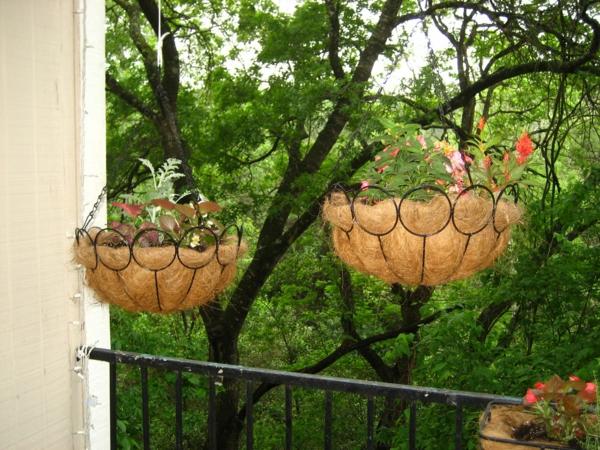 Pflanzen für den Balkon hängen rosa eingetopft interessant