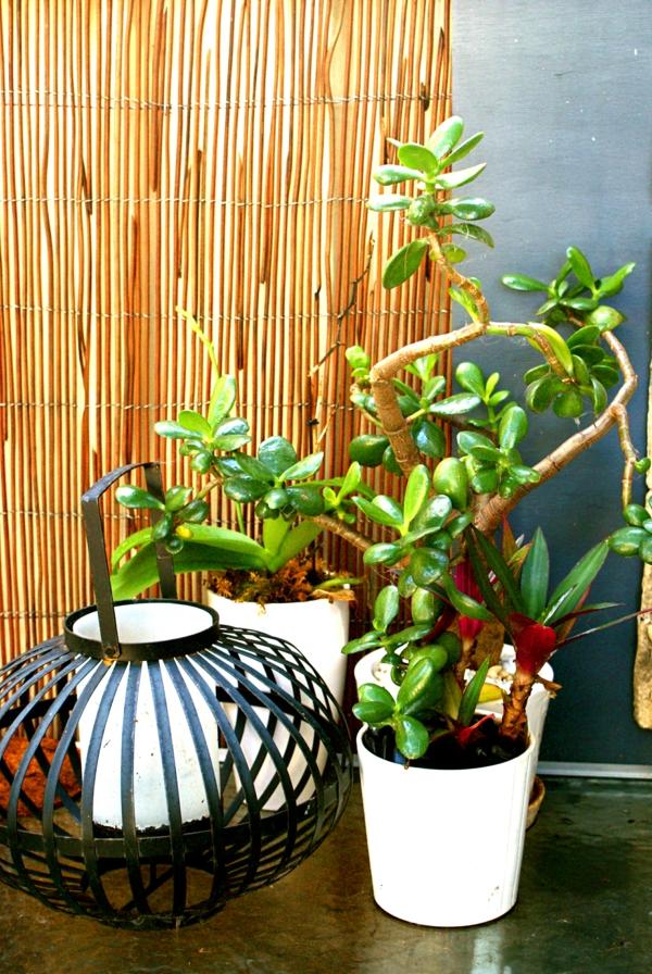 pflanzen für balkon hängen zen asiatisch