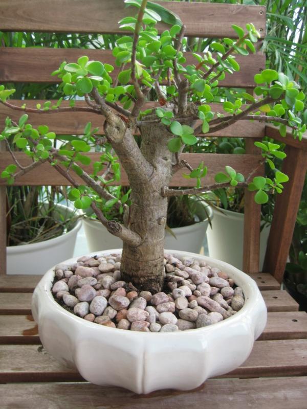 pflanzen für den balkon holz exotisch dekorativ baum