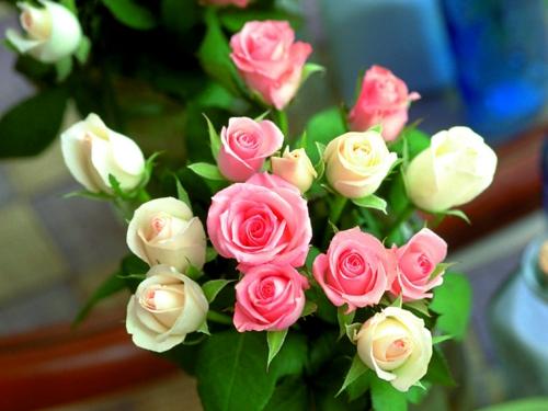 rosengarten richtig pflegen rosa angenehm frische