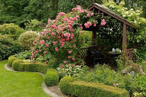 rosengarten richtig pflegen rosa blüten gartenlaube
