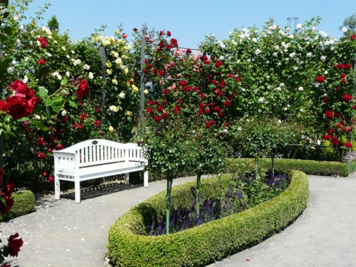 rosengarten richtig pflegen weiße rote blüten bank
