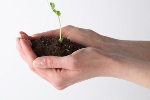 Samen Pflanzen Direkt Im Garten Geeignete Samensorten