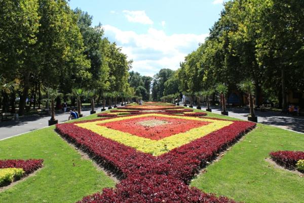 coole pflanzen und gartenkunst  ideen baum bulgarien