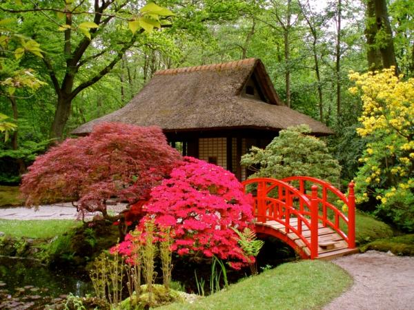 coole pflanzen und gartenkunst  ideen baum japanisch