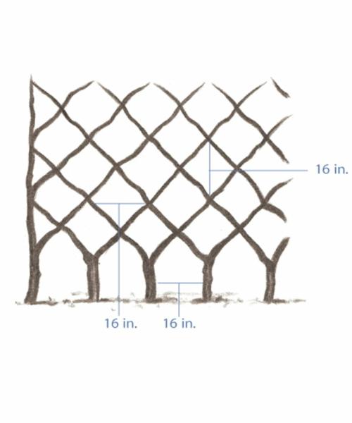 spalier bauen bäume muster diamant entwurf