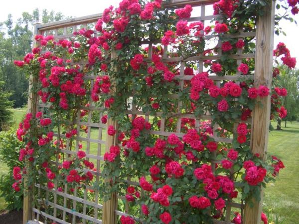 Garten Spalier mit nett design für ihr haus design ideen