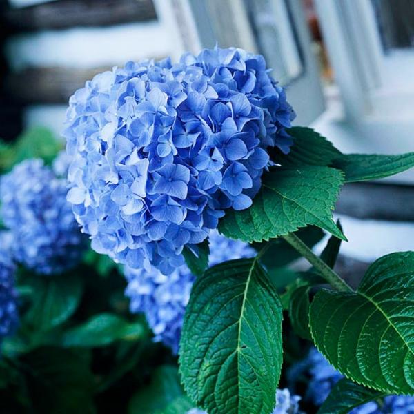 top garten fragen antworten blüten lila