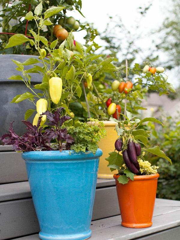 top garten fragen antworten blüten tomaten topf