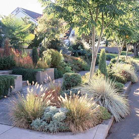 Trockenheitsverträgliche Pflanzen Garten Wasser