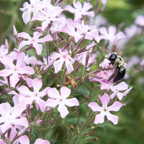 wilden lebensraum im garten blüten lila zart bienen