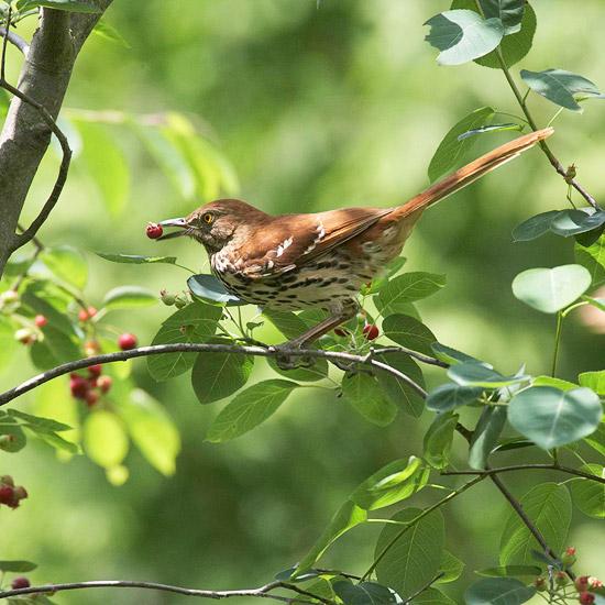wilden lebensraum im garten haus obstbaum vogel