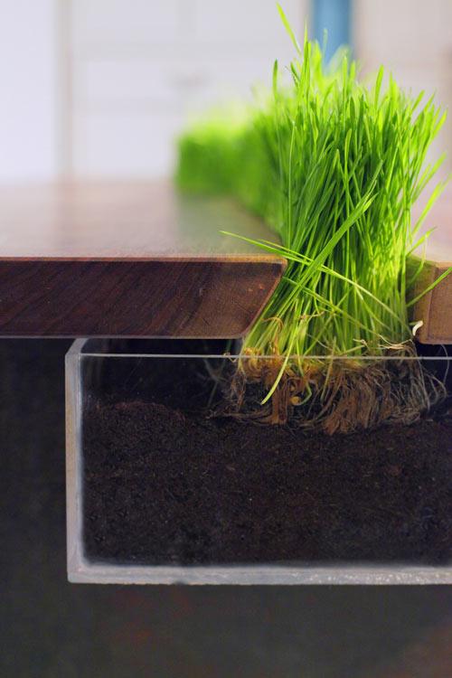 cooler pflanzen behälter tisch weizengras halten durchsichtig