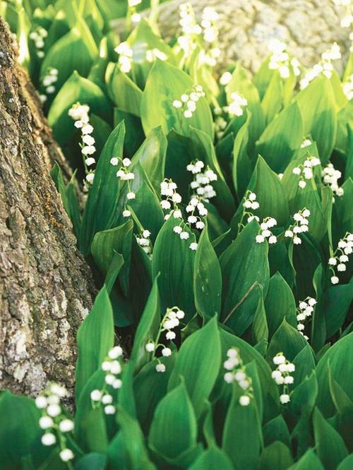 die schönsten weißen blumen im garten pflanzen
