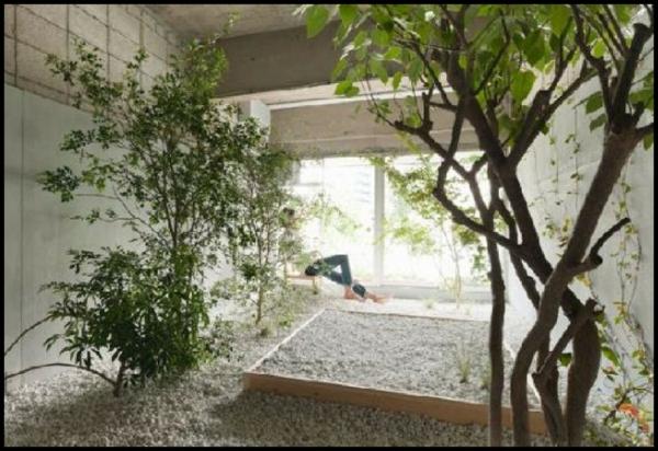 indoor garden gestalten pflegen baum pflanzen
