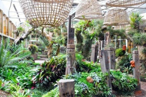 indoor garten gestalten pflegen blumen pflanzenarten