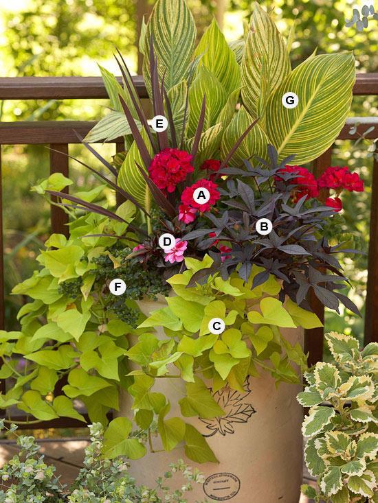 perfekte blumen behälter fröhlich geranien akzent pflanzen