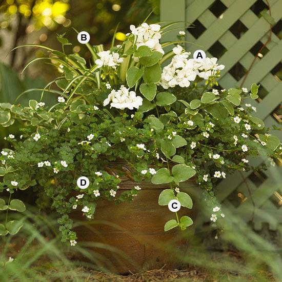 perfekte blumen behälter weiß aussehen spider plant