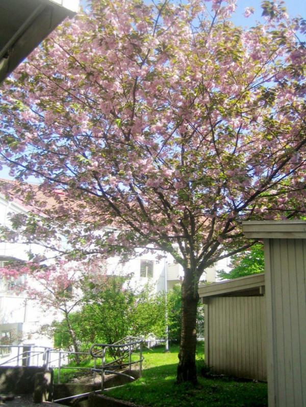 cooles apartment design garten baum blüten rosa