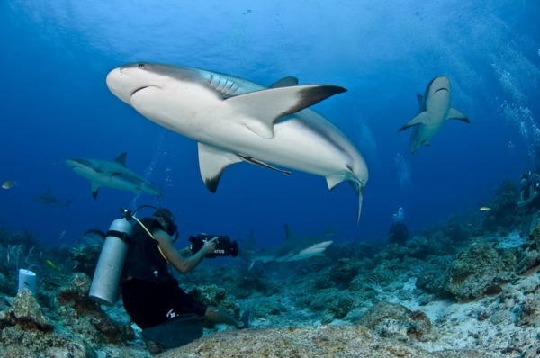 Shark Bay Tours