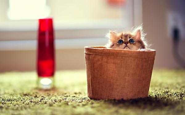 katzen und hunden häuser idee korb klein bequem